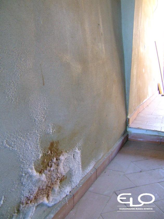 Cristalizzazione o efflorescenze presenza dei sali sui muri - efflorescenza particolare