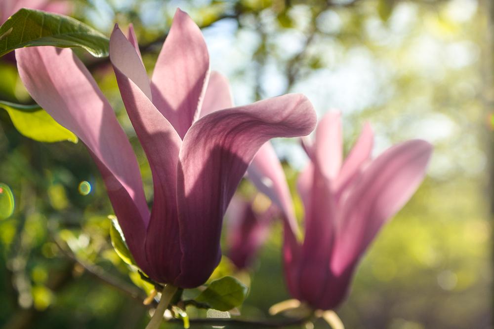 Umidità di risalita e umidità da condensa: la primavera aiuta?