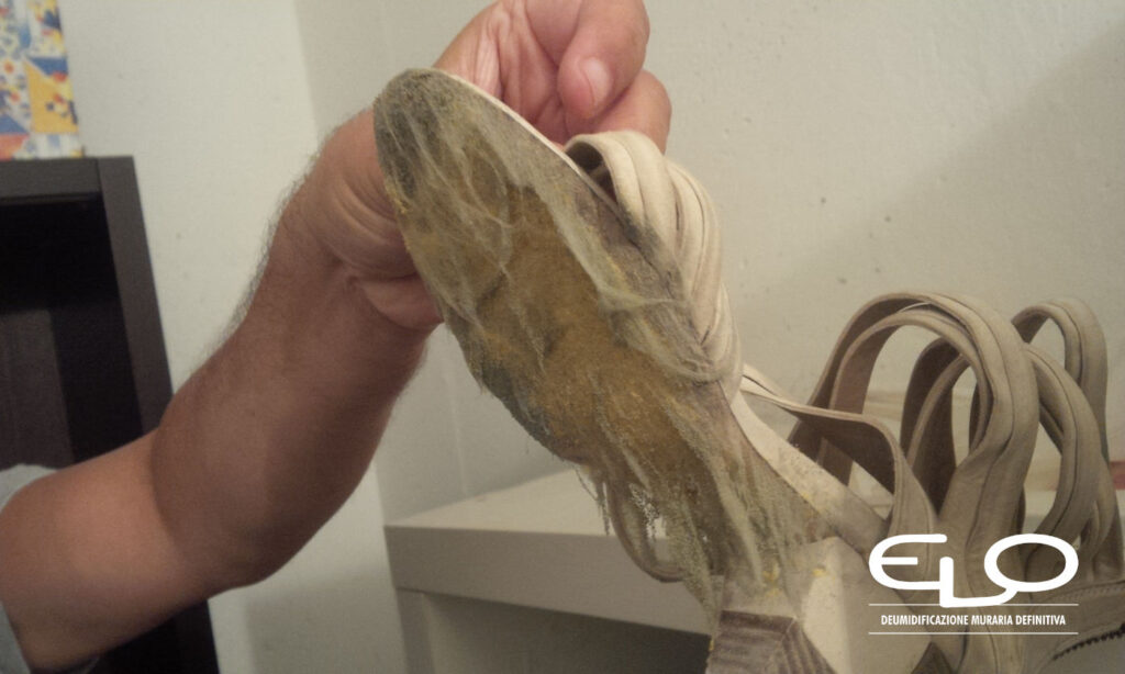 Come eliminare la muffa su vestiti pellame e libri - Scarpa